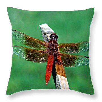 Throw Pillow featuring the photograph Dragonfly by Nick Kloepping