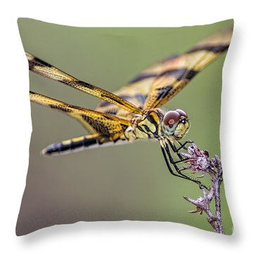 Throw Pillow featuring the photograph The Halloween Pennant Dragonfly by Olga Hamilton