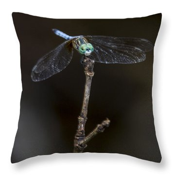 Dragonfly On Branch Throw Pillow