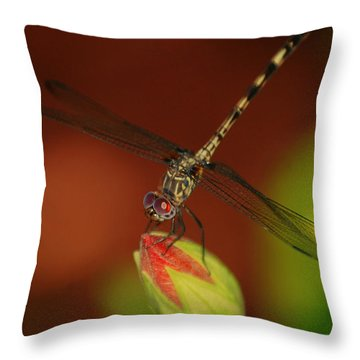 Throw Pillow featuring the photograph Dragonfly On Hibiscus by Leticia Latocki