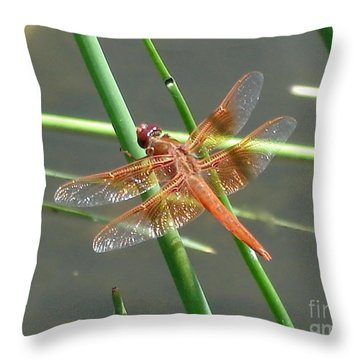 Throw Pillow featuring the photograph Dragonfly Orange by Kerri Mortenson
