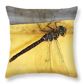 Throw Pillow featuring the photograph Dragonfly Web by Melanie Lankford Photography