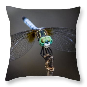 Dragonfly Wings Throw Pillow