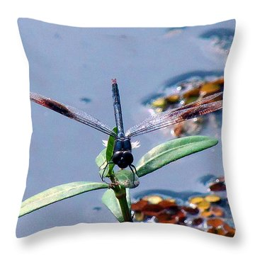 Throw Pillow featuring the photograph Dragonfly001 by Chris Mercer