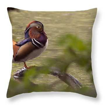 Drake Mandarin Duck Throw Pillow