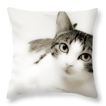Dreamy Cat 2 Throw Pillow by Andee Design