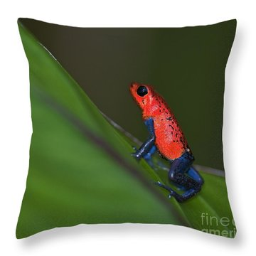 Dressed To Kill.. Throw Pillow by Nina Stavlund