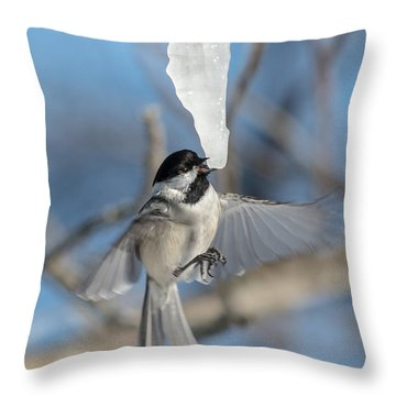 Drinking In Flight Throw Pillow by Cheryl Baxter