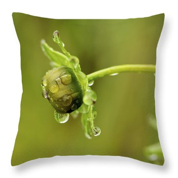 Drip Drip - Raindrops On Coreopsis  Throw Pillow by Jane Eleanor Nicholas