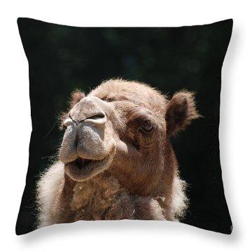 Dromedary Camel Face Throw Pillow by DejaVu Designs
