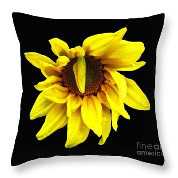 Throw Pillow featuring the photograph Droops Sunflower With Oil Painting Effect by Rose Santuci-Sofranko