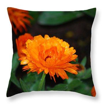 #youcannotwalkoffwithariverinabucket Throw Pillow by Becky Furgason