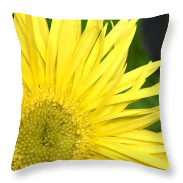 Dsc300d-002 Throw Pillow by Kimberlie Gerner
