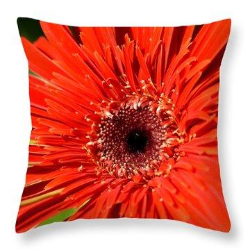 Dsc751d1-001 Throw Pillow by Kimberlie Gerner