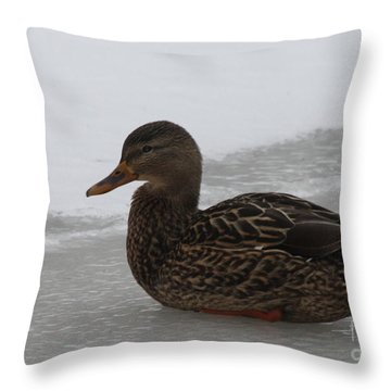 Duck On Ice Throw Pillow by John Telfer