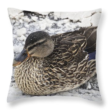 Duck Setting On A Winter Road Throw Pillow