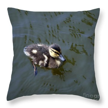 Duckling Exploration Throw Pillow