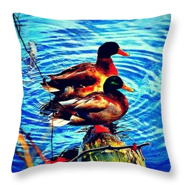 Throw Pillow featuring the photograph Ducks On A Log by Tara Potts