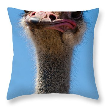 Duh Throw Pillow by Jean Noren