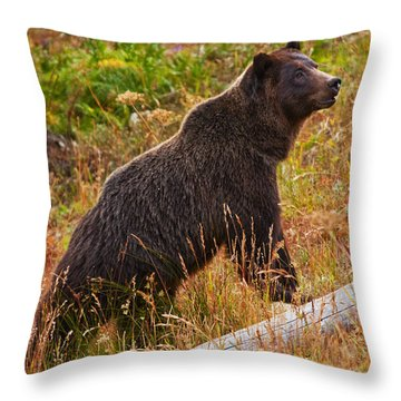 Dunraven Grizzly Throw Pillow by Mark Kiver