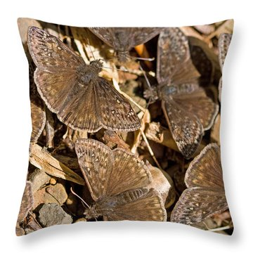 Duskywing Butterflies Throw Pillow by Melinda Fawver