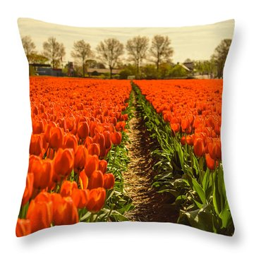 Dutch Landscape Filled With Tulips Throw Pillow