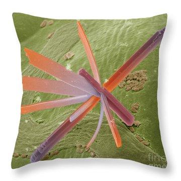 E8400300 - Pesticide Throw Pillow by Spl