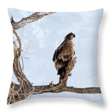 Eagle Eye Throw Pillow by Lori Tordsen