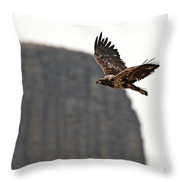 Eagle Flyby Throw Pillow