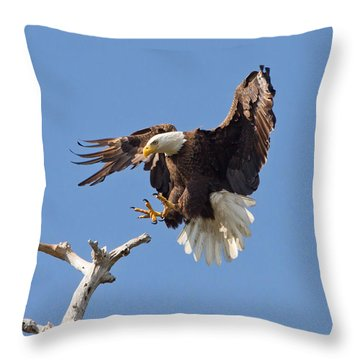 Eagle Landing At Bayonne Preserve Throw Pillow