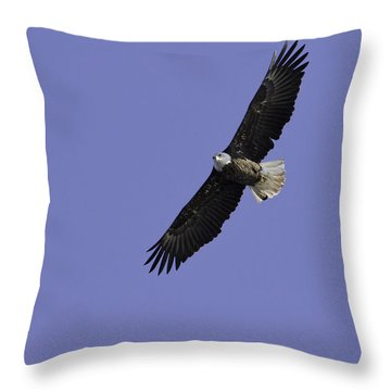 Eagle Soaring In The Sky Throw Pillow by Thomas Young