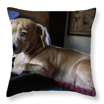 Throw Pillow featuring the photograph Early by Angela J Wright