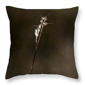 Throw Pillow featuring the photograph Early Autumn by Karen Slagle