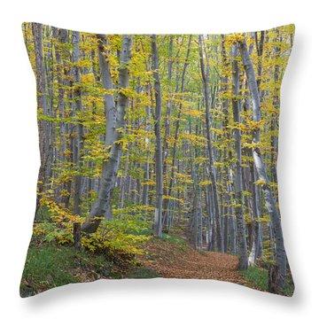 Throw Pillow featuring the photograph Early Autumn Vitosha Mountain Forest Bulgaria by Jivko Nakev