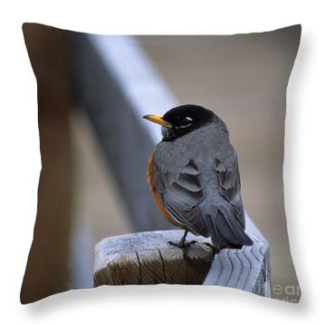 Throw Pillow featuring the photograph Early Bird by Sharon Elliott