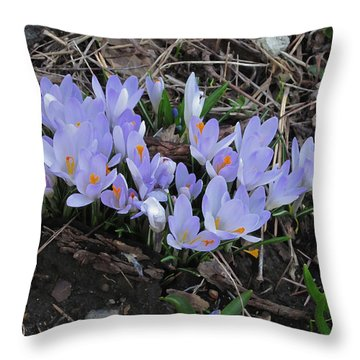 Early Crocuses Throw Pillow
