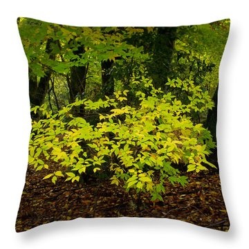 Early Fall In Bidwell Park Throw Pillow