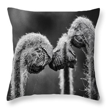 Early Morning Conference Throw Pillow by Susan Capuano