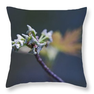 Early Morning Kiss Throw Pillow by Maria Ismanah Schulze-Vorberg