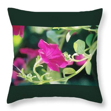 Throw Pillow featuring the photograph Early Morning Petunias by Alan Lakin