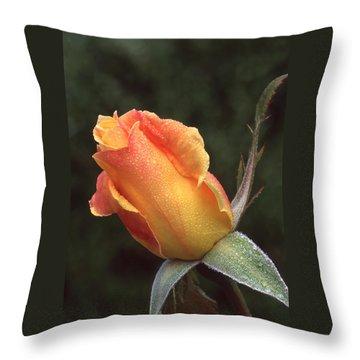 Early Morning Rosebud Throw Pillow
