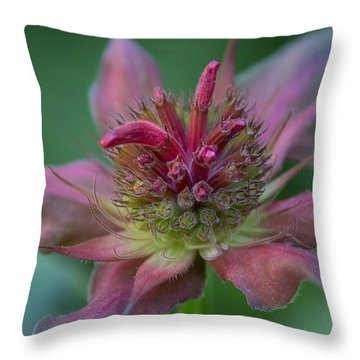 Early Spring Bee Balm Bud Throw Pillow