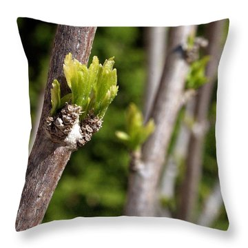 Throw Pillow featuring the photograph Early Spring by Henry Kowalski