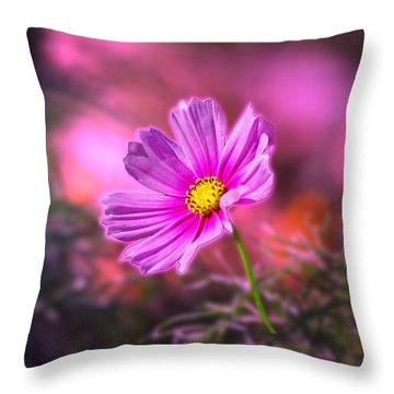 Early Sun Light Throw Pillow by Thomas Woolworth