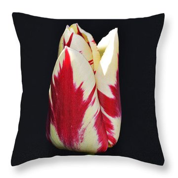 Easter Greetings - Twinkle Tulip Throw Pillow by Felicia Tica