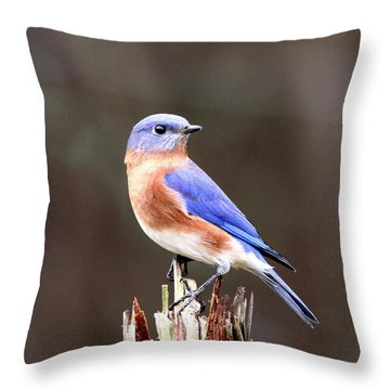 Eastern Bluebird - The Old Fence Post Throw Pillow
