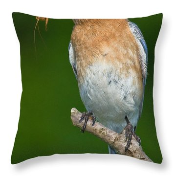Throw Pillow featuring the photograph Eastern Bluebird With Katydid by Jerry Fornarotto