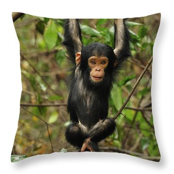 Eastern Chimpanzee Baby Hanging Throw Pillow by Thomas Marent