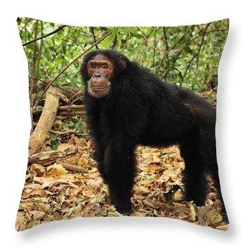 Eastern Chimpanzee Gombe Stream Np Throw Pillow