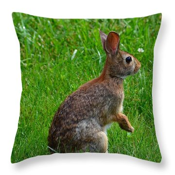 Eastern Cottontail Throw Pillow